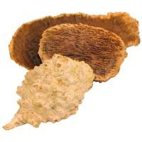 Goldfield-Knollen, 7-8 kg