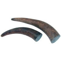 Buffalo Horn Tip Piece, 131-180 g