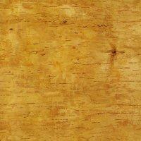 Birch Bark, 50 x 40 cm