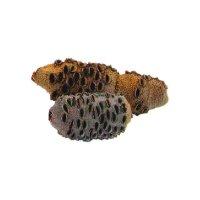 Banksia-Zapfen, Größe 2, 651-1000 g