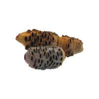 Cocottes de Banksia, taille 1, 400-650 g