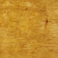 Birch Bark, 65 x 20 cm