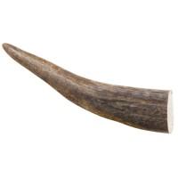 Pointe de bois de cerf