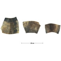 Plaque de corne de vache, 251-330 g