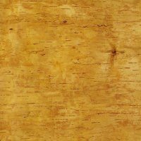 Écorce de bouleau, 50 x 40 cm