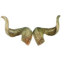 Rams Horn, Pair